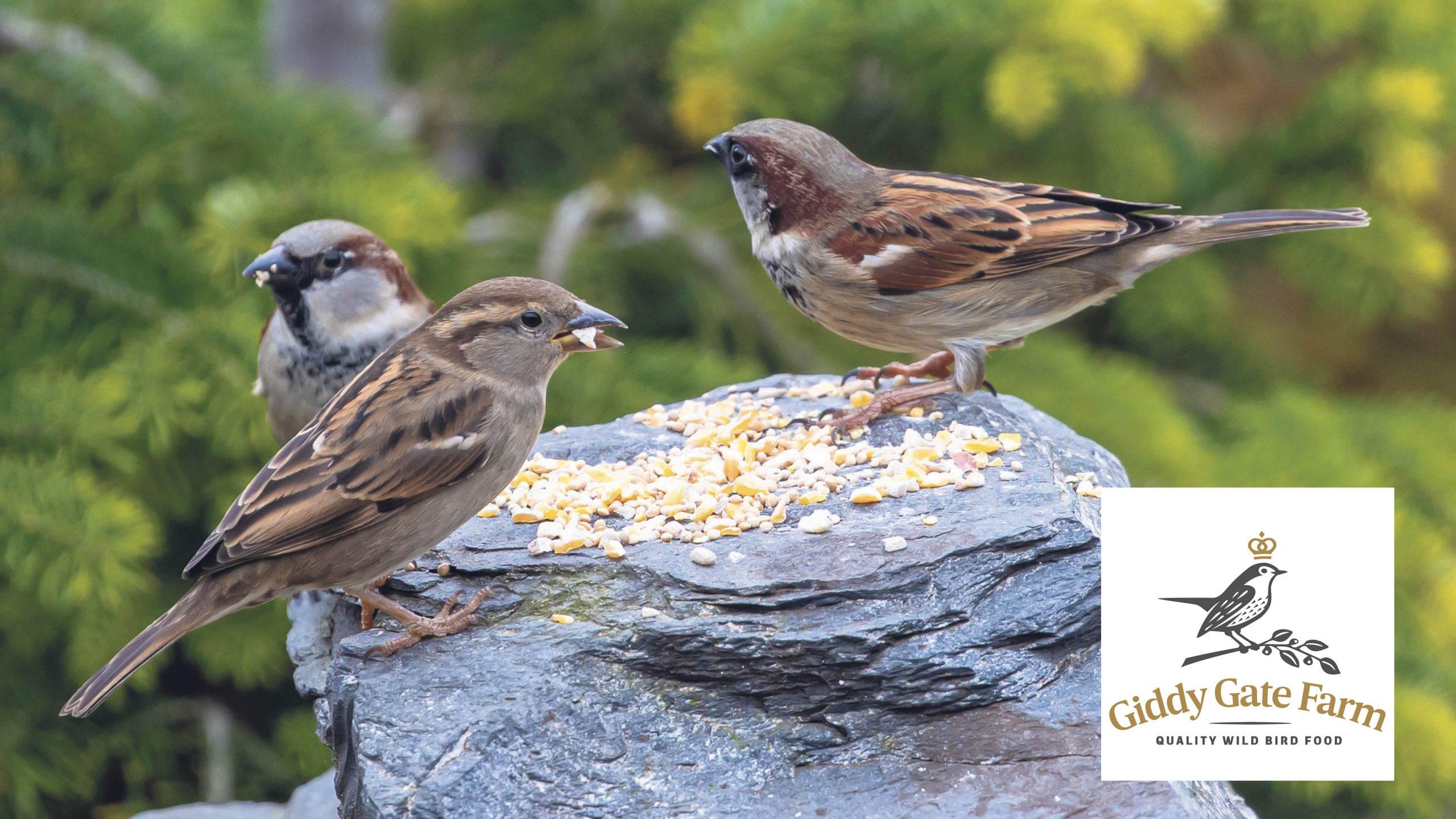 Win a bird feeding bundle for your garden Worth £130!