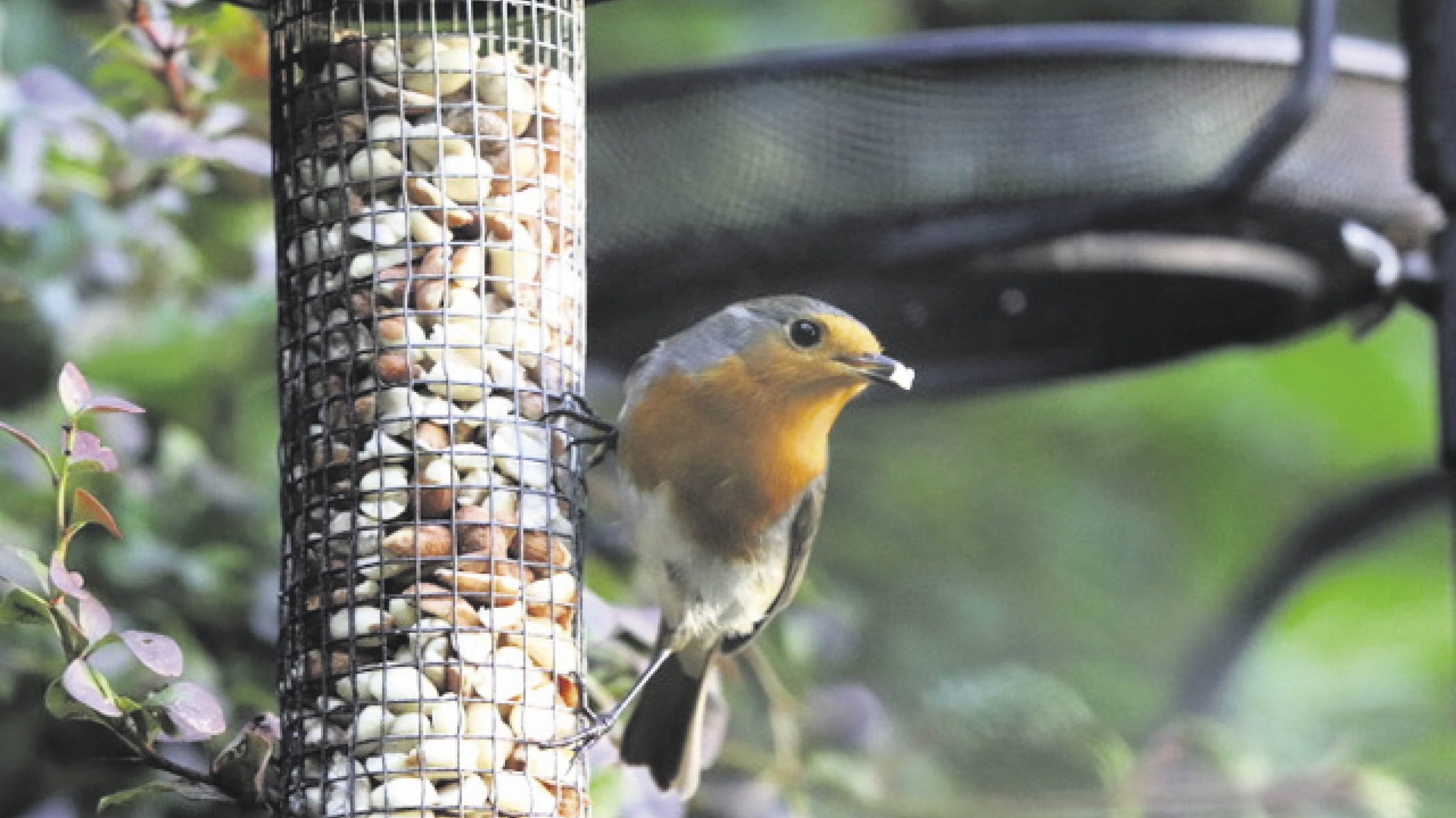Win a supply of nutritious bird food and sturdy garden feeders Worth £100!