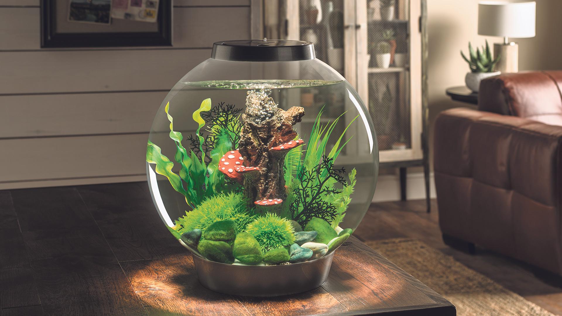 Win a biOrb CLASSIC 30 Aquarium Worth over £134!