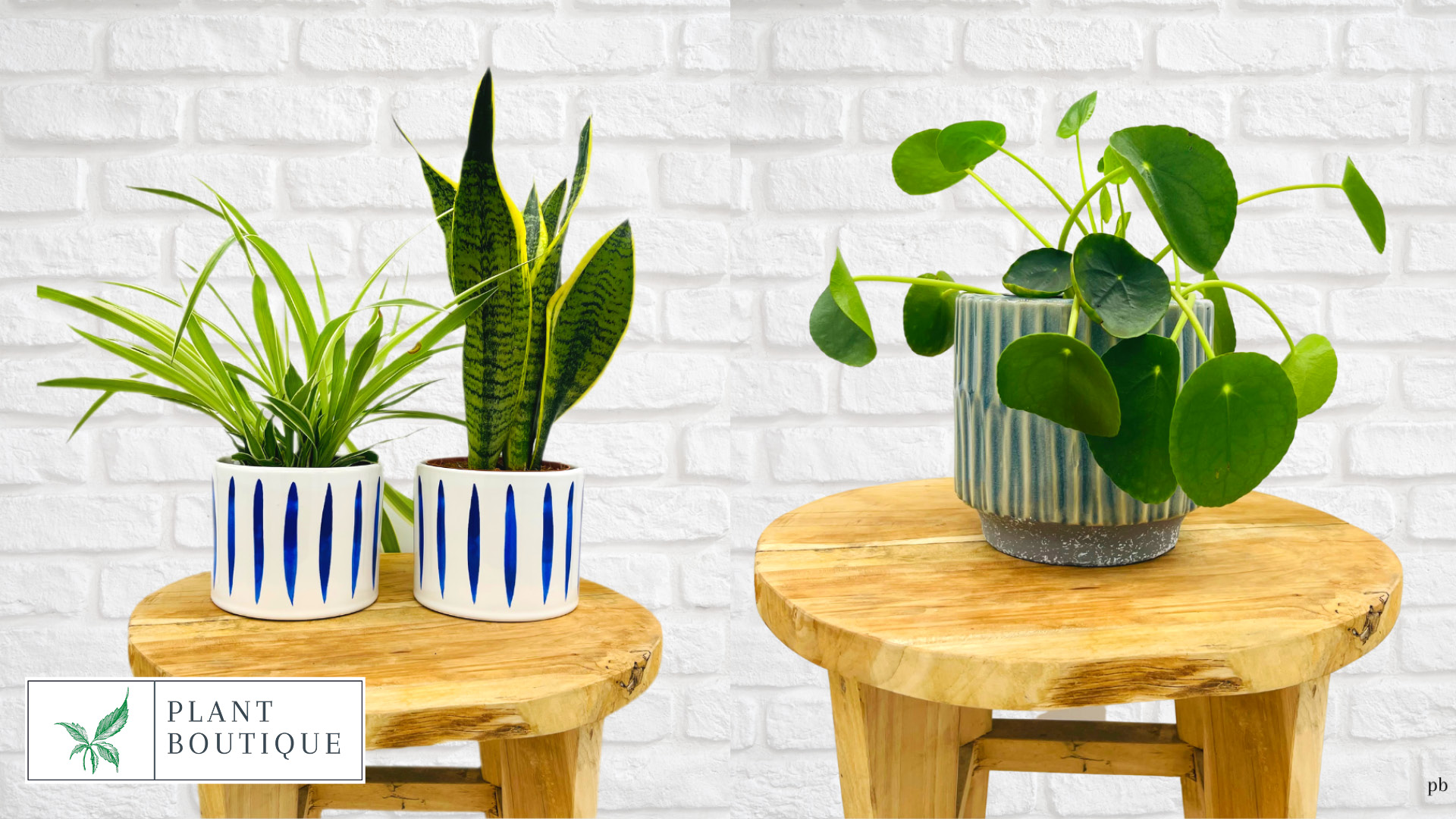 Win one of ten air-purifying indoor plant bundles, sent out in standard nursery pots, Worth £200!