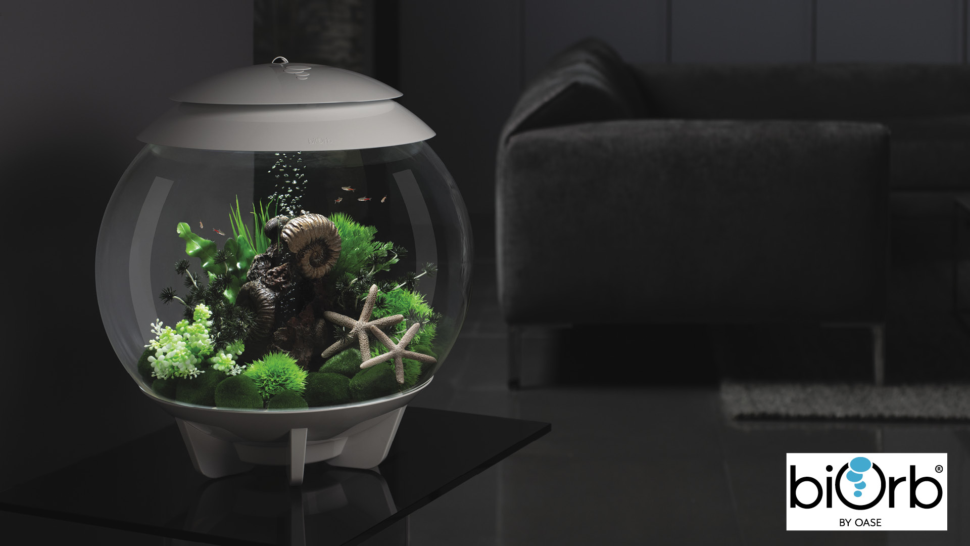 Win a biOrb aquarium Worth £159.99!