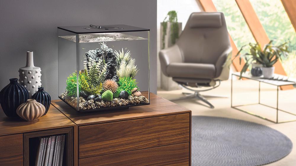 Win a biOrb CUBE 30 aquarium worth over £224!