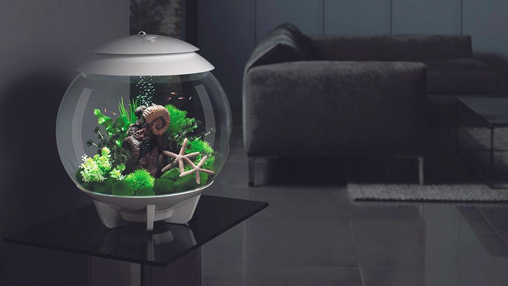 Win a biOrb HALO 30 Aquarium  Worth £159.99!