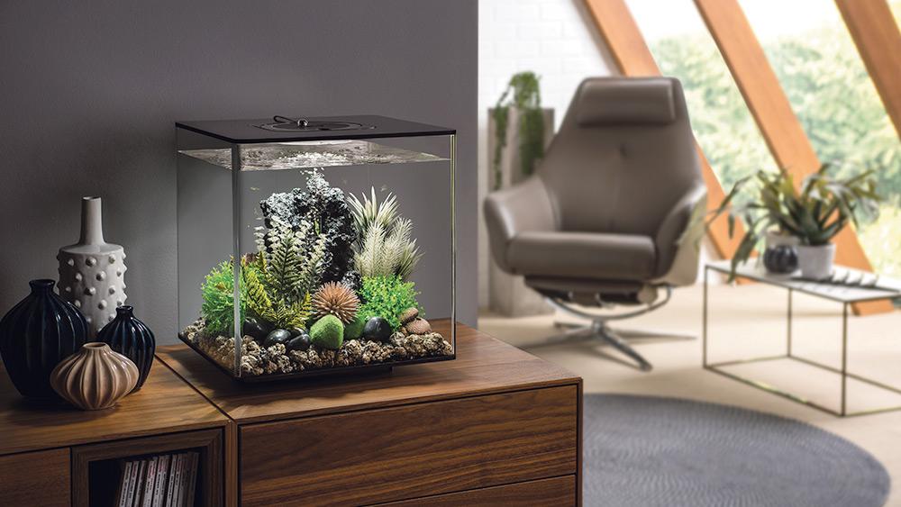 Win a biOrb FLOW 30 aquarium, Worth over £179!