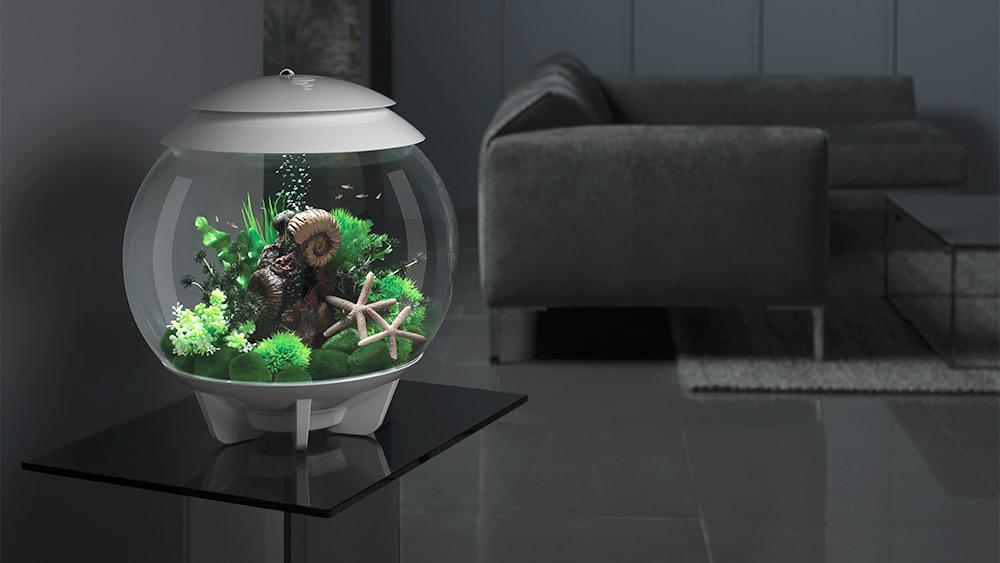 Win a biOrb HALO 30 MCR aquarium for your home, Worth over £159!